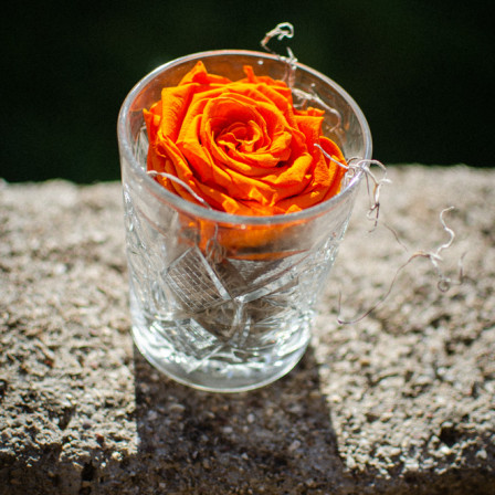 FOR EVER ROSE IN GLASS  ORANGE