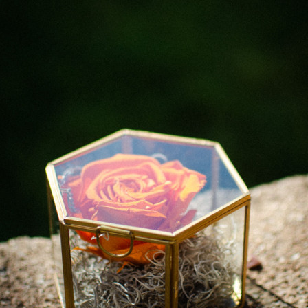 FOR EVER ROSE ORANGE IN PRISMA GOLD OPEN